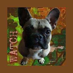 Watchdog Radio